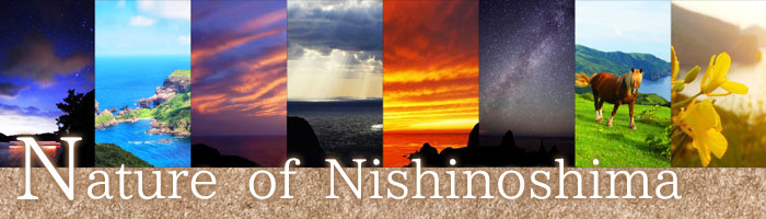 Nature of Nishinoshima